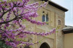 Puerta del Vino, Alhambra, Granada