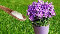 Ecco cosa succede se metti 1 cucchiaino di bicarbonato di sodio nelle piante - YouTube