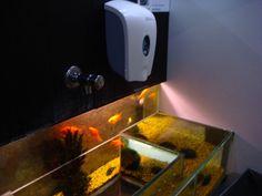 The handbasin fish tank in a bar in Brugge, Belgium