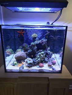 Saltwater Fish Tanks, Saltwater Aquarium, Freshwater Aquarium, Aquarium Fish, Nano Reef Tank, Reptile Cage, Reptile Enclosure, Coral Reef Aquarium, Fish Tank Design