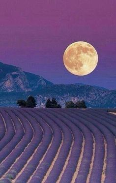 May's Full Flower Moon - Lavender Fields: Provence, France. Beautiful Moon, Beautiful World, Beautiful Places, Beautiful Pictures, Valensole, Shoot The Moon, Lavender Fields, Lavander, Lavender Blue