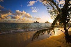 Pacific Sunrise Lanikai à La Plage à Hawaii Par L'intermédiaire D'un Palmier Banque D'Images, Photos, Illustrations Libre De Droits. Image 4384583.
