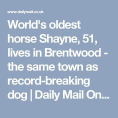 World's oldest horse Shayne, 51, lives in Brentwood - the same town as record-breaking dog | Daily Mail Online