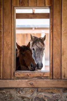 Visit Botlierskop for a Horseback Safaris
