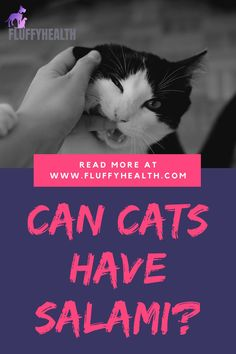 Can cats have salami? One of the questions frequently asked when pet parents are trying to introduce new food to their feline friends. But can it be incorporated into their meals? Can cats have salami? The fearsome of human foods allowed for cats is the only thing that ruins the snacking-time between pet parents and their cats. #fluffyhealth #thecattribe #catfood #salami #food #catlife Different Breeds Of Cats, Healthy Cat Food, Homemade Cat Food, Pregnant Cat, Cat Hacks, Cat Care Tips, Outdoor Cats, Fluffy Cat, Cat Life