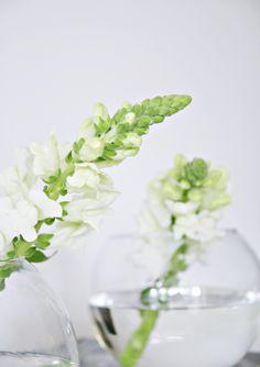 Flower White Gardens, Glass Vase, Flowers, Prada, Perfume, Notes, Pearls, Home Decor, Report Cards