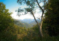 #Oasi #Zegna - Il #Bosco del #Sorriso. (#Forest of #Smiles, Italy). In #Piemonte, nella provincia di #Biella. www.oasizegna.com
