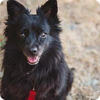 THE DAVINCI FOUNDATION FOR ANIMALS RESCUE ACROSS THE NATION:Rescue Info Adopt A Pet :: Juniper - Burlington, WA