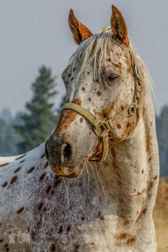 Horse of a different color -  Jacklynn Matthews