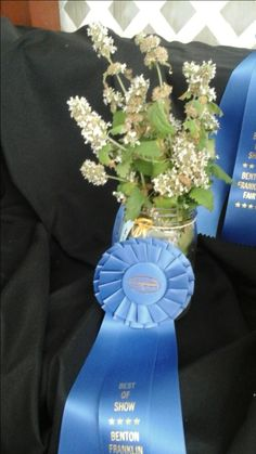 Our award winning catnip