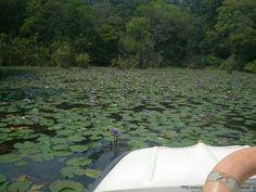 Pookottoor lake, Wayanad, Kerala