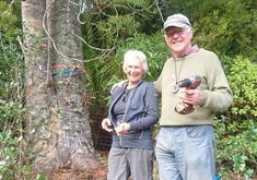 Kauri Rescue has treated another 400 trees for kauri dieback this year, after Auckland Council agreed to take over funding the community project. Auckland, Challenges, Trees, Strong, Community, Science, Life, Tree Structure, Wood