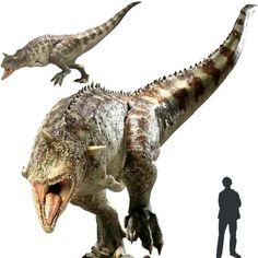 Miembro del grupo de dinosaurios llamado Carnotaurios. Lo más característico de este dinosaurio son los dos pequeños cuernos en su cabeza. También se encontraron marcas de piel en forma de disco que presentaban escudos óseos por la parte superior de la cabeza, espalda y cola. Hera un terópodo de tamaño medio. Sus patas delanteras eran aun más cortas que las del Tiranosaurio. Tenía una cabeza muy pequeña en comparación con otros depredadores de su tamaño.