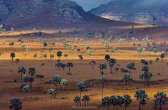 Madagascar by Frans Lanting