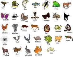 Forum | Learn English | If You Were Not a Human Which Animal Would You Like to Be? :)) | Fluent Land