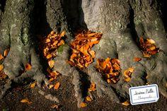 Concours photo Couleurs d'automne : gagnez votre Pack de cours de photo en ligne