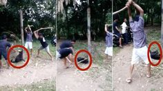 Please sign! Defenseless dog bashed until it DIES by laughing teens in Bali! Stop Animal Cruelty, Save Life, Animal Welfare, Animal Rights, Sick, How To Find Out, Acting, Dog Cat, Horrible People