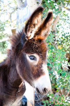 I think donkeys are very under-appreciated as a species. They are gentle and wise and intelligent in their way.