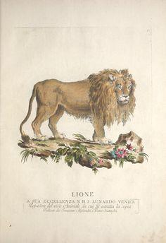 Descrizioni degli animali : corrispondenti alle cinquanta figure continente in questo ... volume de'quadrupedi (1771)