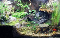 Un paludarium avec poissons néons