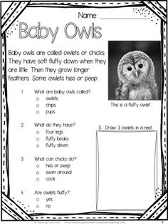 Baby Owls! Reading FREEBIE! Owl Activities, Reading Activities, Guided Reading, Classroom Activities, Reading Comprehension Worksheets, Reading Passages, Birds Of Prey, Baby Owls, Owl Babies