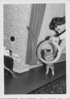 (Teaching cats physical tricks keeps their mind and bodies active! Old Cats, Cats And Kittens, Crazy Cat Lady, Crazy Cats, Owning A Cat, Cat People, Creature Feature, Vintage Cat, Vintage Photos