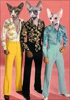 Cat Set of 4 Mod 70's Cats sphynx cats fashion by RikkiVanCamp, $12.00