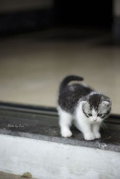 This kitty is adorable!