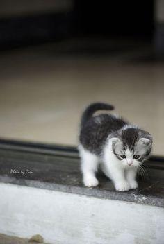 micetto!