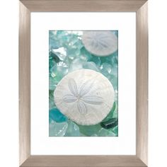 Found it at Wayfair - Pro Tour Memorabilia Sea Glass and Sand Dollar Framed Photographic Print