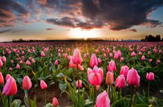 8 Wonderful Tulip Fields Around The World http://www.wannaknows.com/8-wonderful-tulip-fields-around-the-world/ … pic.twitter.com/0I6TNhhqkH