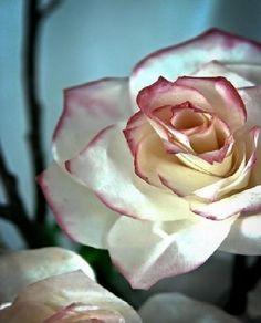 Krok po kroku: Piękne róże wykonane z filtrów do kawy