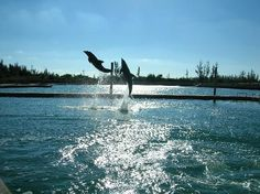 UNEXSO Freeport, Bahamas, we got to be up close and personal with the dolphins :)