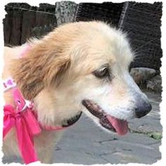 Teefje Kika van Dog Rescue Greece Happy Endings, Rescue Dogs, Shelter, Greece, Corgi, Van, Animals, Greece Country, Animaux