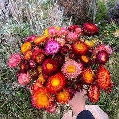 """Gröna Fingrar on Instagram: """"Dom sista eternellerna är plockade🌱 #odla #odling #odla2019 #odlahemma #sommarblommor #eternell #köksträdgård #trädgård"""" Pumpkin, Plants, Outdoor, Instagram, Outdoors, Pumpkins, Flora, Butternut Squash, Squash"""