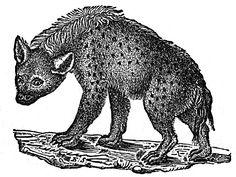 hyaena.jpg (1030×776)
