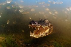 Veolia Environnement wildlife photographer of the year – in pictures
