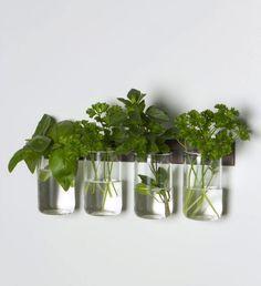 Macetas con vasos de cristal