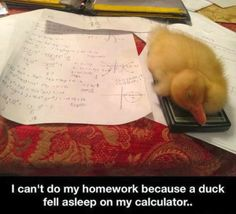 That should be my excuse when I don't have my homeworkr say a duck at it or a duck fell asleep on my calculator so tell which one I should say toodles!