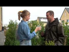 De grote Tuinverbouwing - Theeplant en thee drinken
