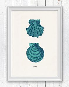 Vintage sea shell Sallops   Vintage sea shell by seasideprints