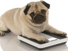 Dog treats can pack on the pounds. #AnimalHealth #Dogs #wbtv3  Link: http://www.wbtv.com/story/20753647/dog-treats-can-pack-on-the-pounds-vets-say