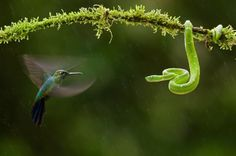 """Showdown in the wild. (Picture: Bence Mate, """"Fly to Eye"""")"""