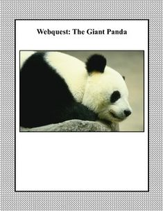 Pandas are  charming and playful animals. This web search is designed to give students factual information about panda bears as they read for information using the internet. During the search they use a variety of strategies and skills that will build their strengths in reading.An Answer Key is provided.This is also included in a bundled offeringMarvelous Mammals!