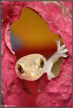 ~~ gecko ~~ hai there! ~~