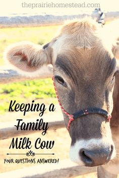 Keeping a Family Milk Cow: Your Questions Answered