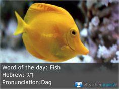Word of the day: Fish  Hebrew: דָּג  Pronunciation:Dag