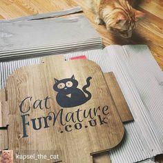 @Regrann from @kapsel_the_cat -  LOOK! That's for me! #catfurnature @catfurnature  #catlove #koty #kapsel #cats #catnap  #catsofinsta #catsofworld #catsoftheworld #catsofinstagram #bestmeow #bestcatsofinsta #purrfect #persiancat  #meowdel #mainecoon #tabby #turkishangoracat #gingertabby #orangecat #orangetabby #animalsaddict #instacat #instapet #instakitten #petstagram #instafollow #instamood #fluffy