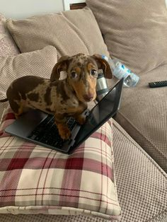 If you are a dachshund owner, you must be familiar with funny moments or lovely activities your sausage dogs do. Your four-legged friends can be… Funny Dachshund, Dachshund Puppies, Funny Dogs, Cute Dogs, Funny Animals, Cute Animals, Dachshunds, Weenie Dogs, Doggies