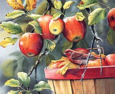 Fall Apple Harvest (Purple Finch) by Susan Bourdet Watercolor Fruit, Watercolor And Ink, Watercolor Paintings, Bird Paintings, Watercolours, Nature Artists, Art Themes, Wildlife Art, Art Pages